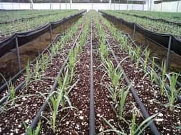 A drip irrigation system installed inside of a greenhouse in Amarillo, TX